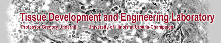 Tissue Development and Engineering Lab, Prof. Gregory Underhill, Bioengineering, University of Illinois at Urbana-Champaign